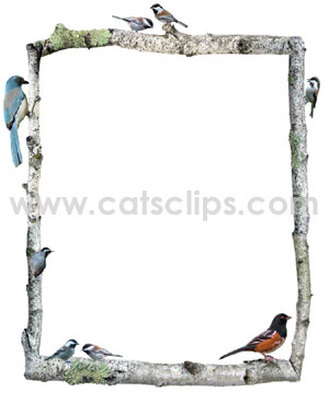 birch branches with birds border
