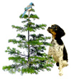bird dog tree