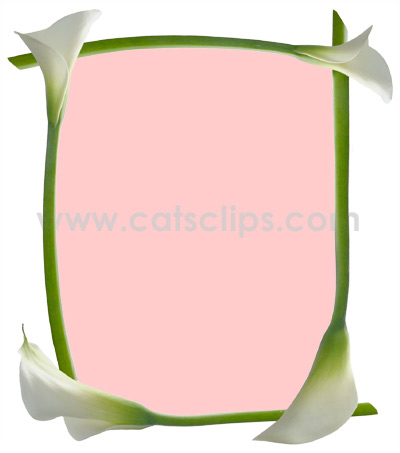 Calla Lily Pink Border