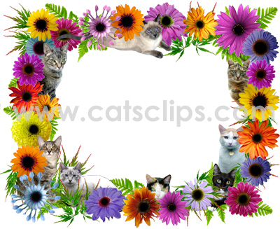 cat flowers border