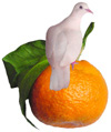 dove on tangerine