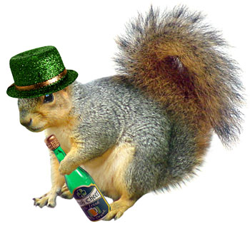 Irish squirrel drinking beer