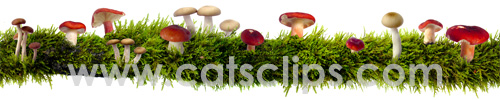 mossy branch with mushrooms border
