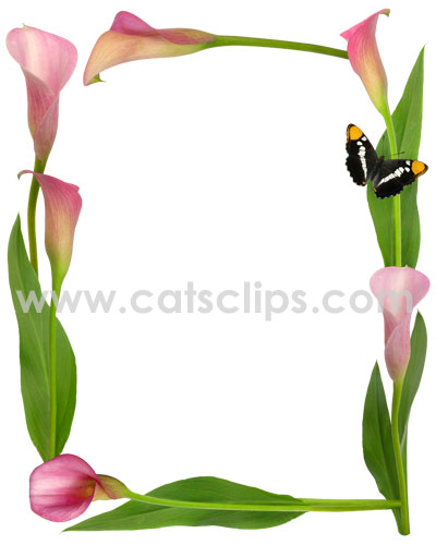Pink Calla Lily Butterfly Border