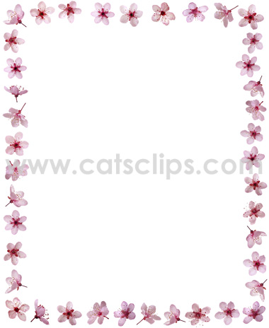 pink plum flowers border