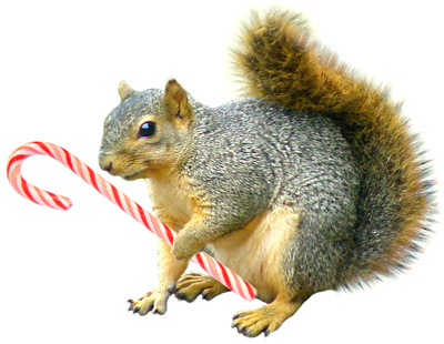 squirrel with candycane