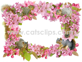 squirrel and crabapple flowers border