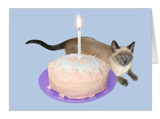 siamese cat cake birthday card at zazzle