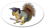 squirrel graduate sticker